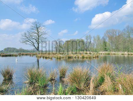 in Schwalm-Nette Nature Park near Nettetal in Lower Rhine District,Rhineland,North Rhine Westphalia,Germany