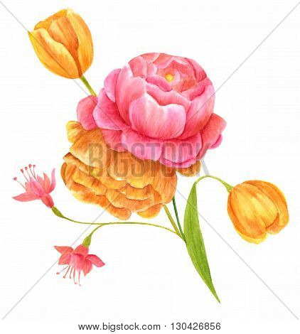 A watercolor drawing of a bouquet of flowers (buttercups tulips and fuchsias) hand painted on white background in the style of vintage botanical art
