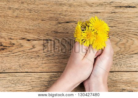 Two female hands holding a small bouquet of yellow dandelions on an old wooden table