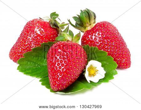 three strawberries with flower and leaves isolated on white background.