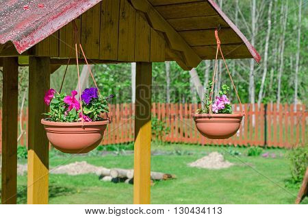 Multi-colored petunias in pots. The original decoration for the well