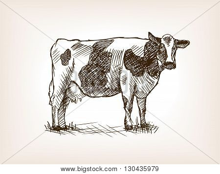 Cow sketch style vector illustration. Old engraving imitation.