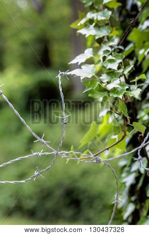 barbed wire and nature. opposites