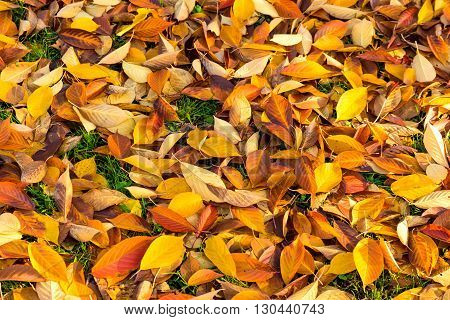 Nice colourful leaves on the ground in the autumn