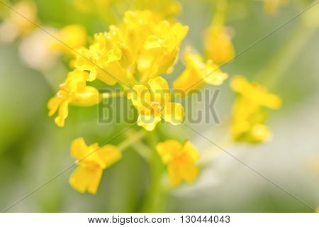 The yellow flower which is brightly lit with the sun. Close up soft focus small depth of sharpness