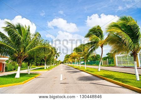 Exotic highway grey road with green palm trees in sunny windy weather outdoor on blue sky with white clouds background