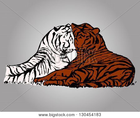 Graphic picture of wild cats. Two tigers lie next to. Abstract colored drawing tiger on grey background vector
