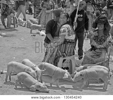 QUETZALTENANGO GUATEMALA APRIL 28 2016 : People sale pigs in Quetzaltenango maket. This native market is the most colorful in Central America