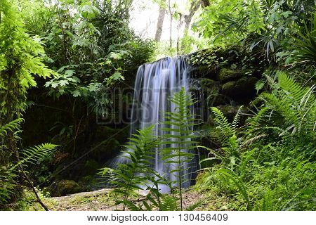 Waterfall flowing down Moss covered rock in the Springtime at a Florida State Park.
