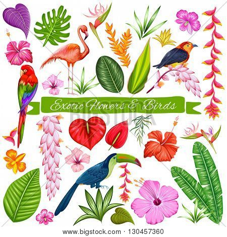 illustration of Exotic Tropical Flower, Bird and Leaf set for designing purpose