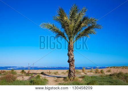 Denia beach Las Marinas with palm trees in Mediterranean Alicante of Spain