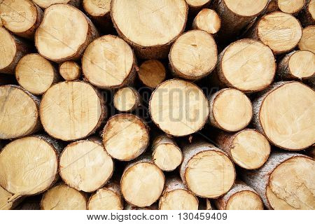 mass tree stump background
