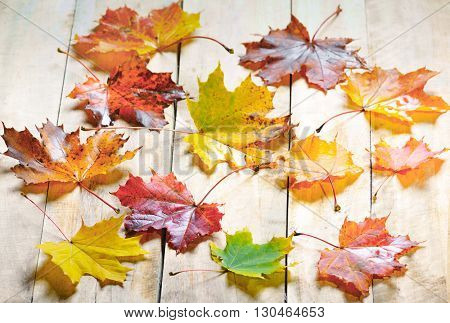 autumn maple leaves isolated on wood background