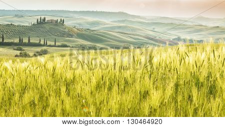 Landscape of Tuscany, hills and meadows, Toscana - Italy, Europe.