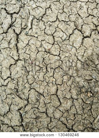 close up dry cracked soil texture for background