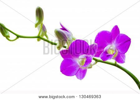 Bright purple flowers on a white background.