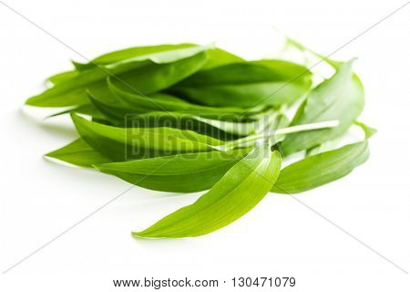 Fresh ramsons leaves. Wild garlic leaves isolated on white background.