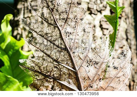 close up Dry decay brown leaf texture