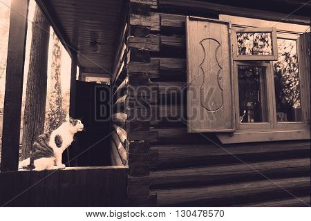 Nostalgic monochrome retro photo of wooden block country house with window and cat fragment