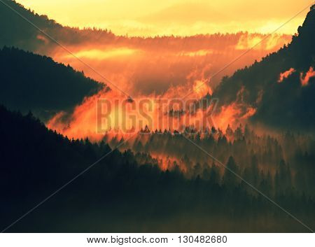 Fantastic Red Awakening Of Nature. Misty Beautiful Valley. Peaks Of Hills Are Sticking Up From Heavy