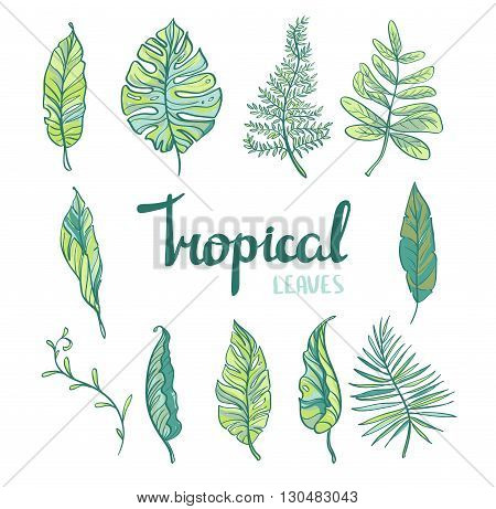 Set of tropical leaves isolated on white background. Vector illustration