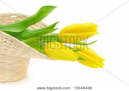 Yellow Tulips In Basket