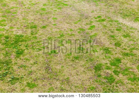 Green Fresh Grass Of Empty Meadow, Texture