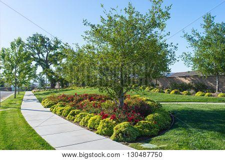 Peaceful Park Sidewalk