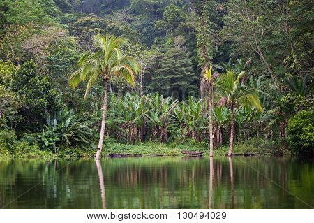 Green jungle and water lake Balinsasayao in Dumaguete Negros Island Philippines