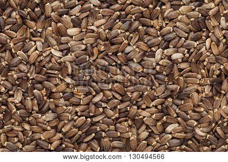 Organic Milk Thistle (Silybum marianum) seeds. Macro close up background texture. Top view.