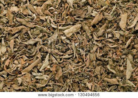 Organic green basil leaves (Ocimum tenuiflorum). Macro close up background texture. Top view.