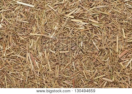 Organic dried Indian Lemongrass (Cymbopogon citratus). Macro close up background texture. Top view.