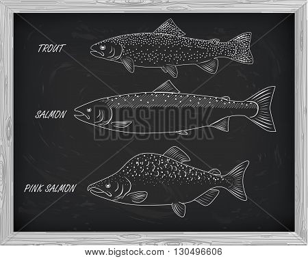 Beautiful Pattern Of Salmon, Trout And Pink Salmon. With A Drawing Of White