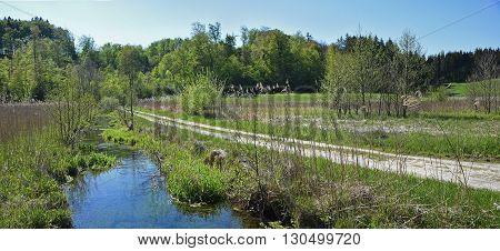 Hiking Trail Through Wilderness, Winding Creek. Panoramic View