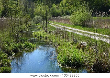 Hiking Trail Through Wilderness, Winding Creek