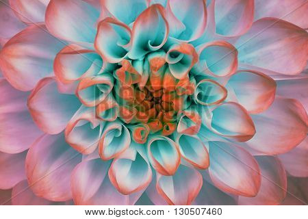 Dahlia flower closeup. Macro. It can be used in website design and printing. Also good for designers. Red green.