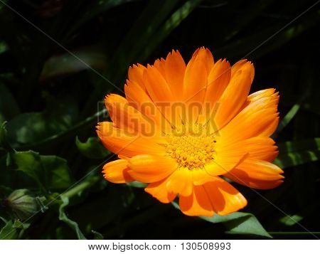 stunning orange flower bathing in bright sunlight