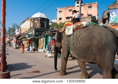 UTTAR PRADESH, INDIA - DECEMBER 29, 2012: Indian elephant goes through the old city on December 29, 2012 in Chitrakoot India. Forest area in Uttar Pradesh is 16583 km2 which is about 6.88 perc of the state.