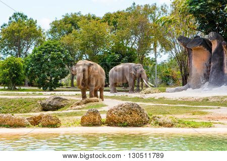 two elephants in a zoo on sunny summer day. Wild animals. Miami, Florida.