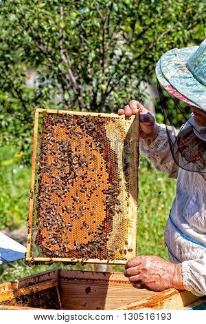 Frame with honeycombs with honey in the beekeeper's hands on an apiary