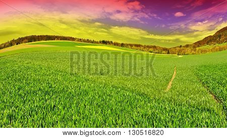 Track of Tractor on the Green Grass in Swiss Alps at Sunset