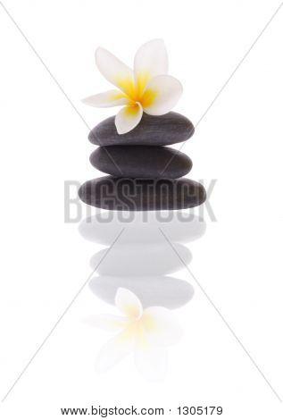 Frangipani On Stones