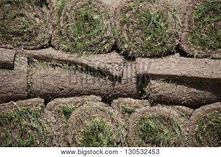 Gardening. Landscaping. Lawn grass and ground rolls