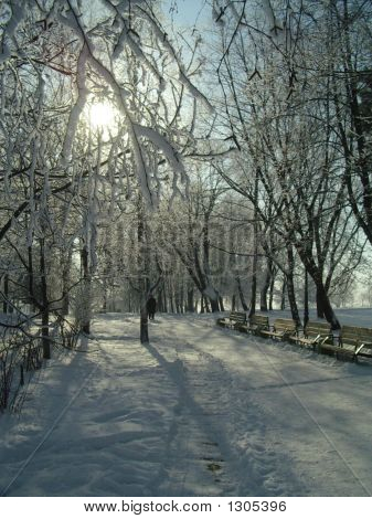 Winterscape