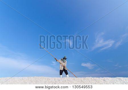 Worker is harvesting sea salt at salt field in Samut Songkhram province Thailand.