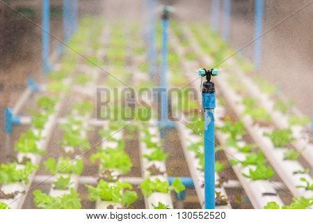 Water sprinkler system working in hydroponics vegetable farm. Seclective focus