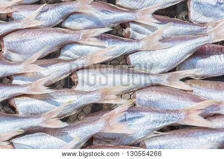 Threadfin fish dry out on sieve for sell.