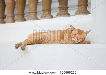 orange cat sleep on floor in lazy day