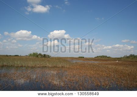 a picture of the florida everglades swamp