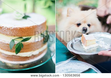 Collage photo of wedding cake in rustic style and little cute puppy in the forest.